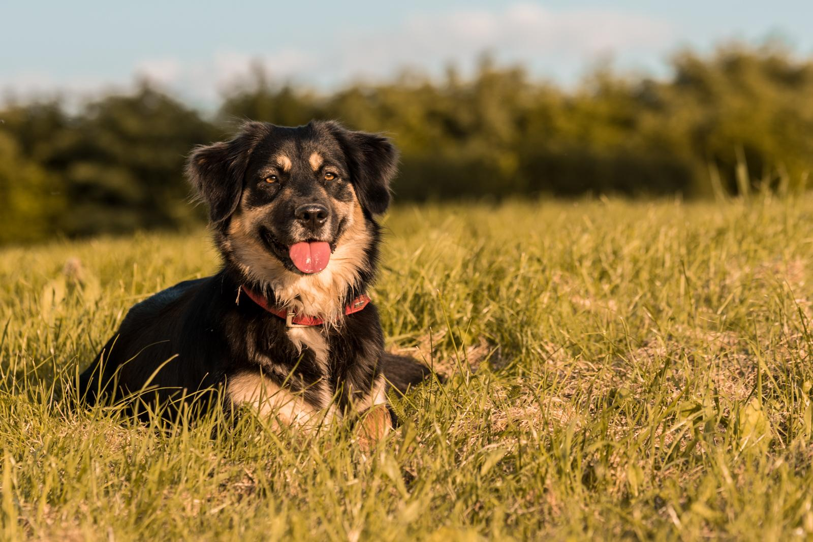 Tierfotograf-Labrador-Sven's Bildwerke-Hund-Hundefotografie13